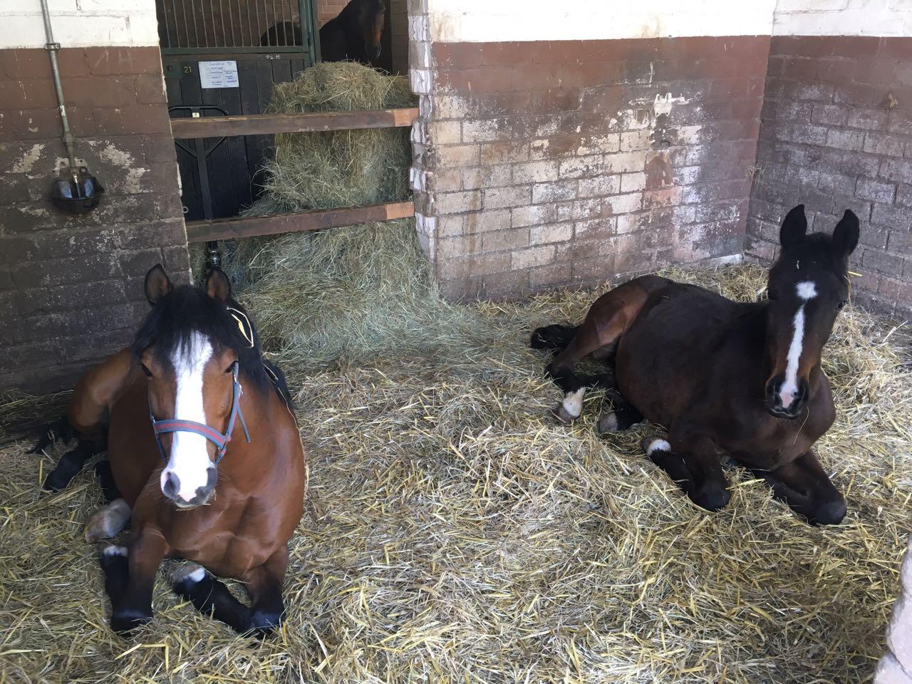 Camillo und Seppel während der Mittagsruhe