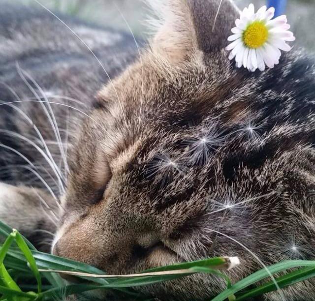 Die beste Katze gibt es nur bei uns