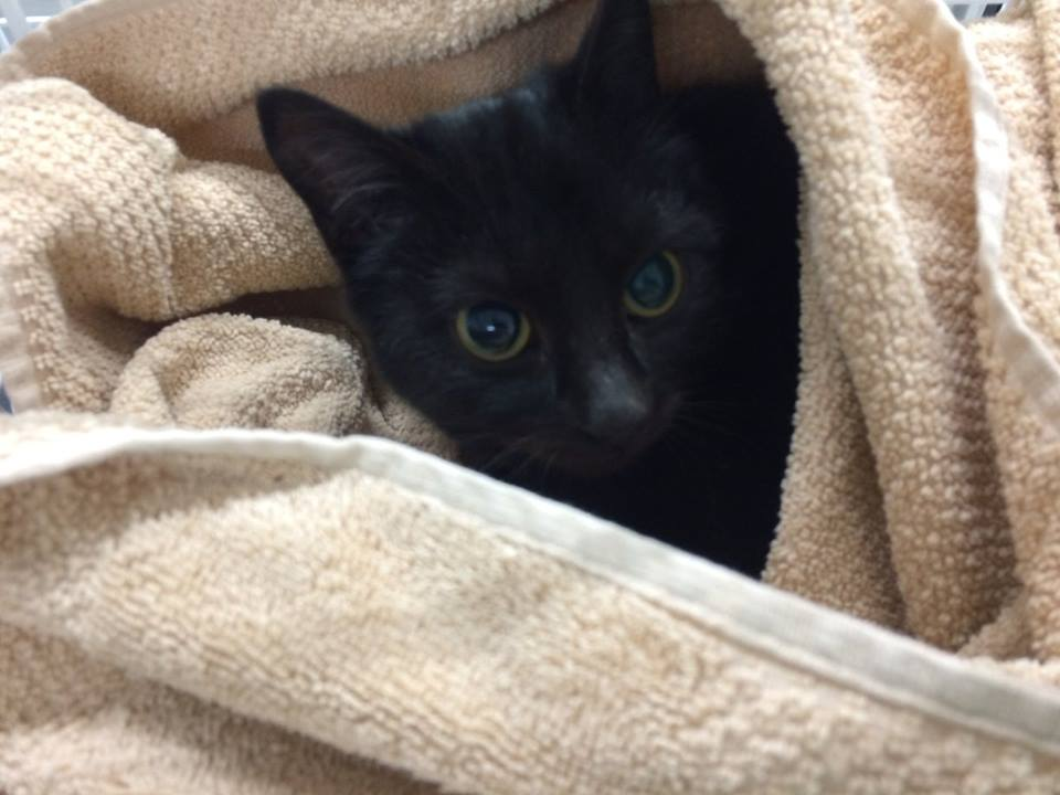 Katze ca. 1 Jahr