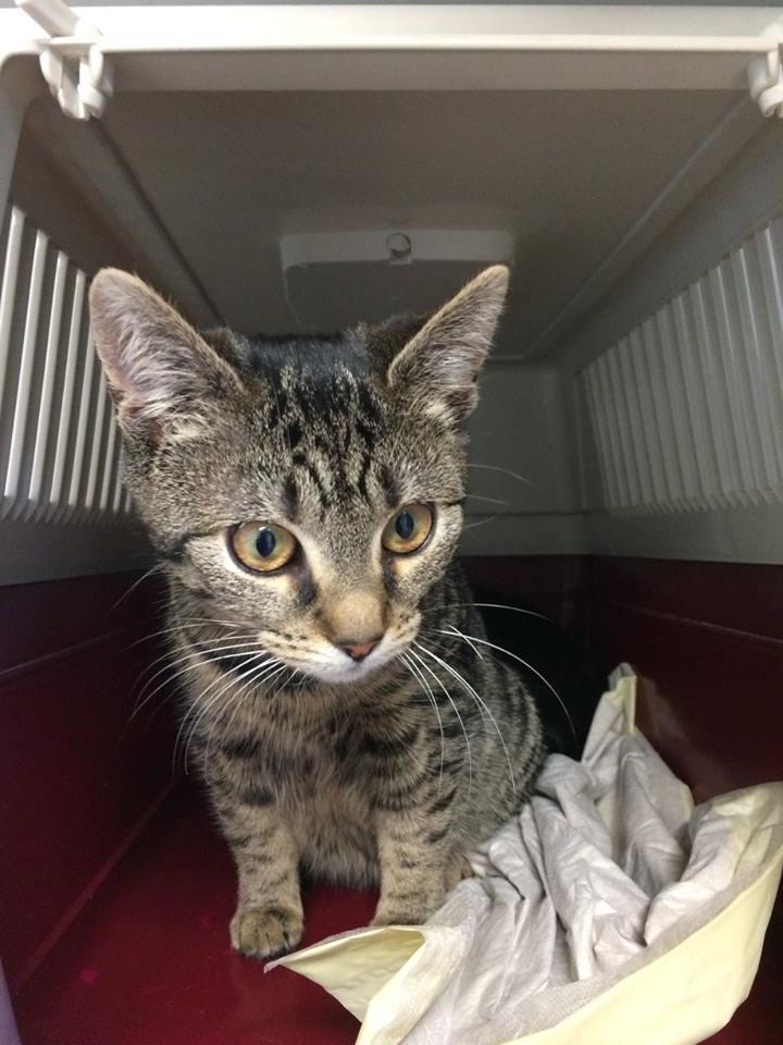 Katze ca. 5 Monate