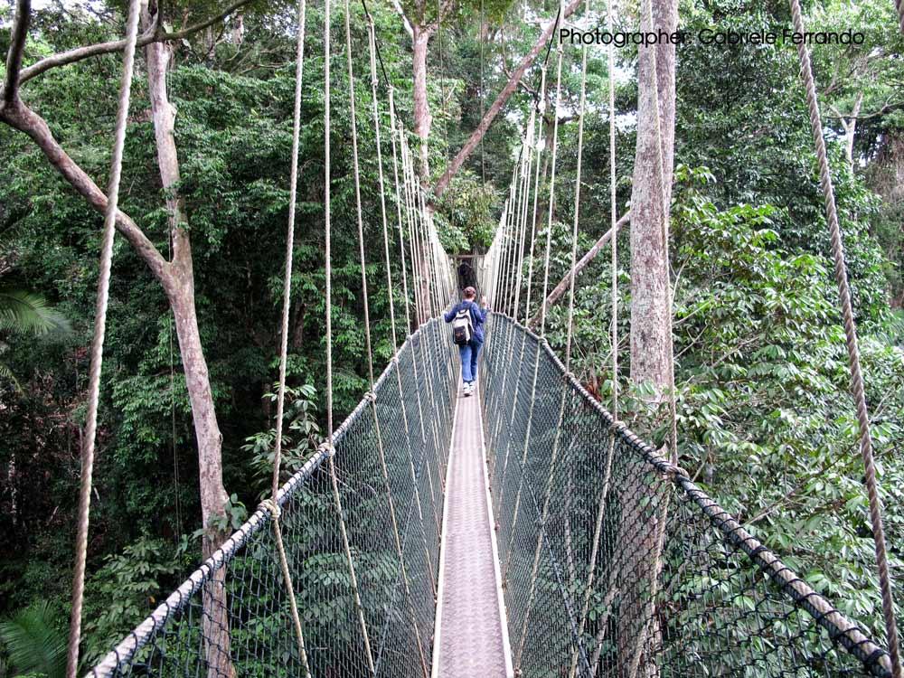 Attraversando un ponte nel parco Nazionale Taman Negara - Malesia (Photo by: Gabriele Ferrando)