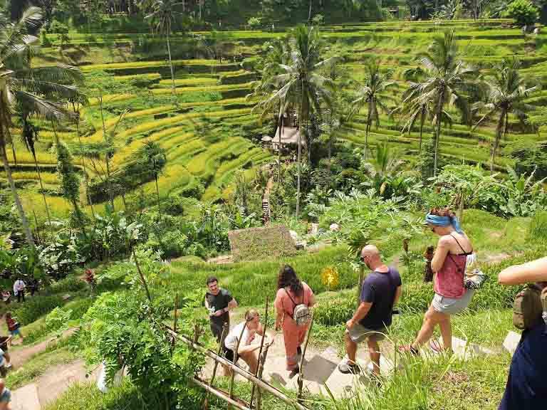 Tegalalang Rice Terrace ad Ubud - BALI