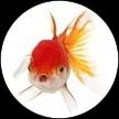 teeshirts imprimés poissons