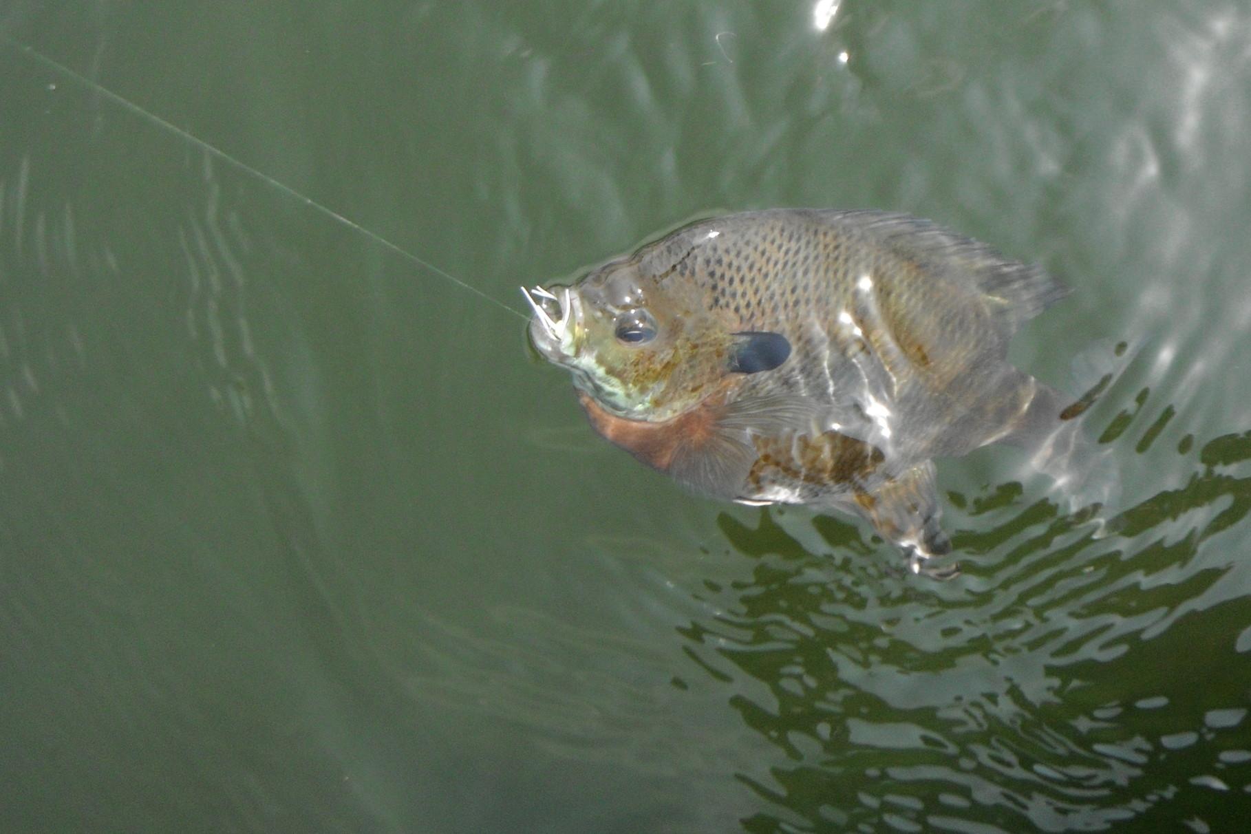 Freshwater Permit