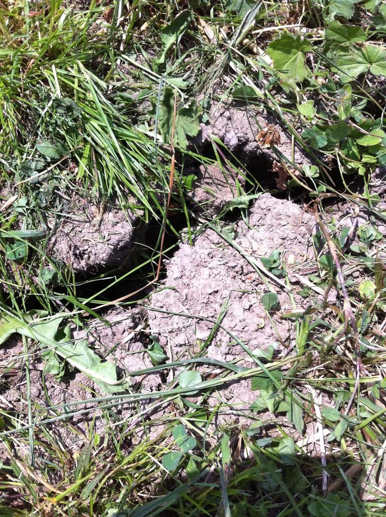 Der trockene Sommer macht dem Boden sichtbar zu schaffen