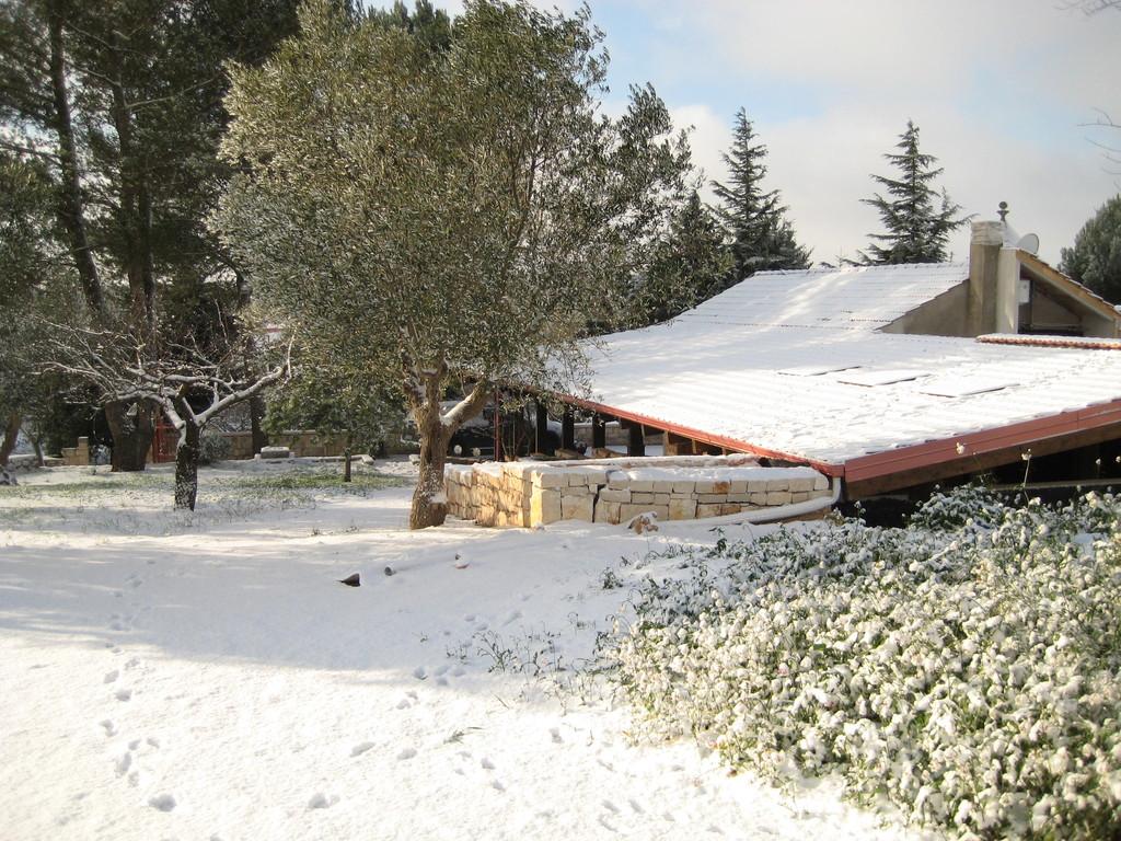 Particolare in Inverno