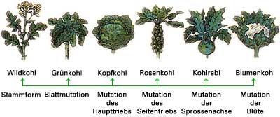 (Quelle: Wissensspeicher Biologie, Berlin 1979)