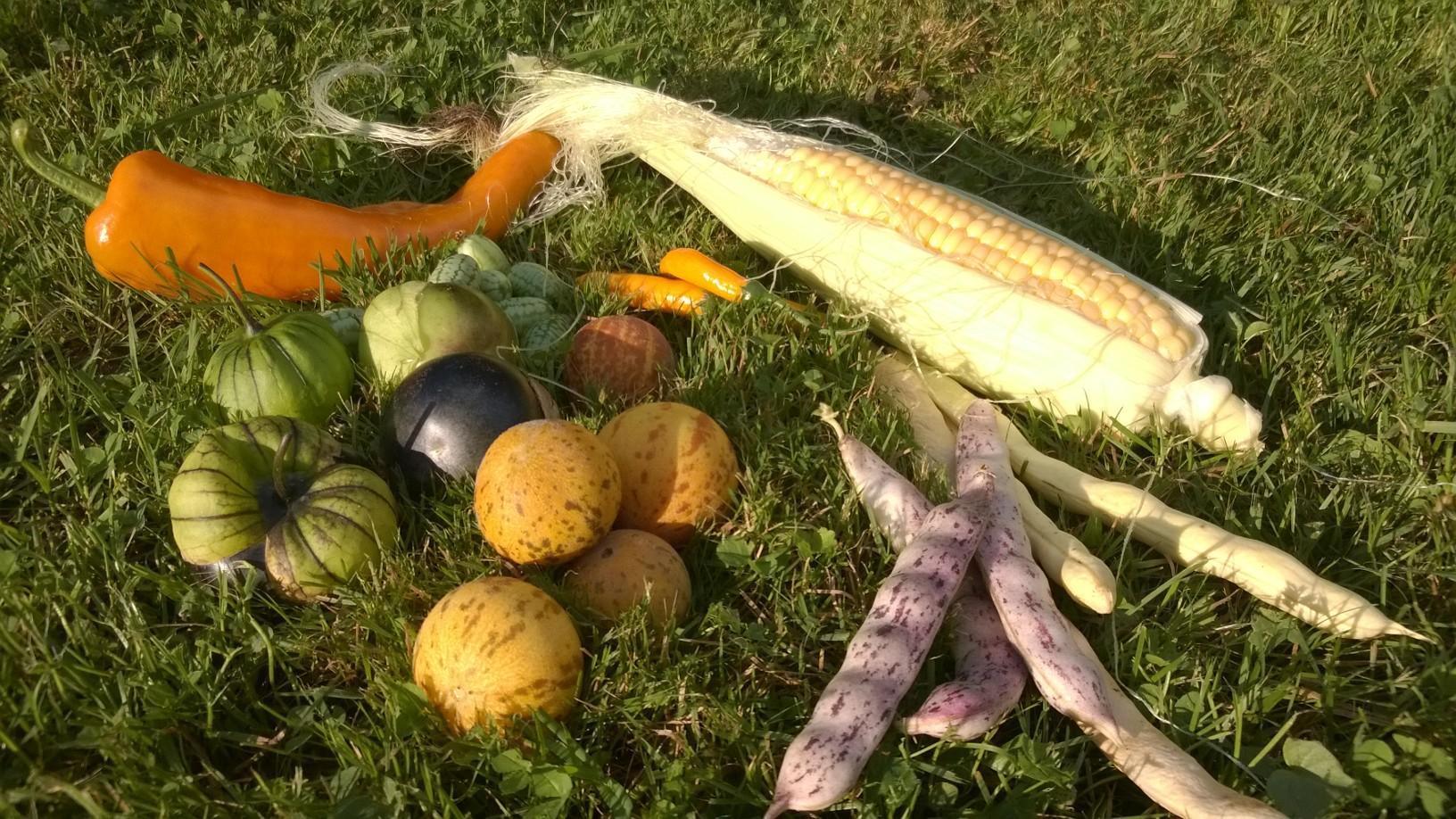Gemüse aus der neuen Welt