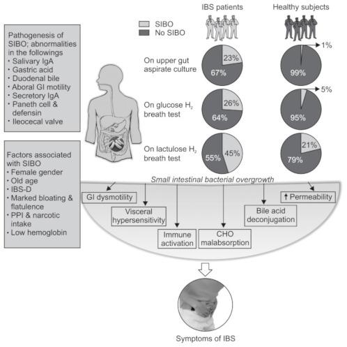 Vergleich der Prävalenz der Dünndarmfehlbesiedlung nach Diagnostikmethode - Aspirat: 1%, Glucose: 5% und Lactulose: 21%