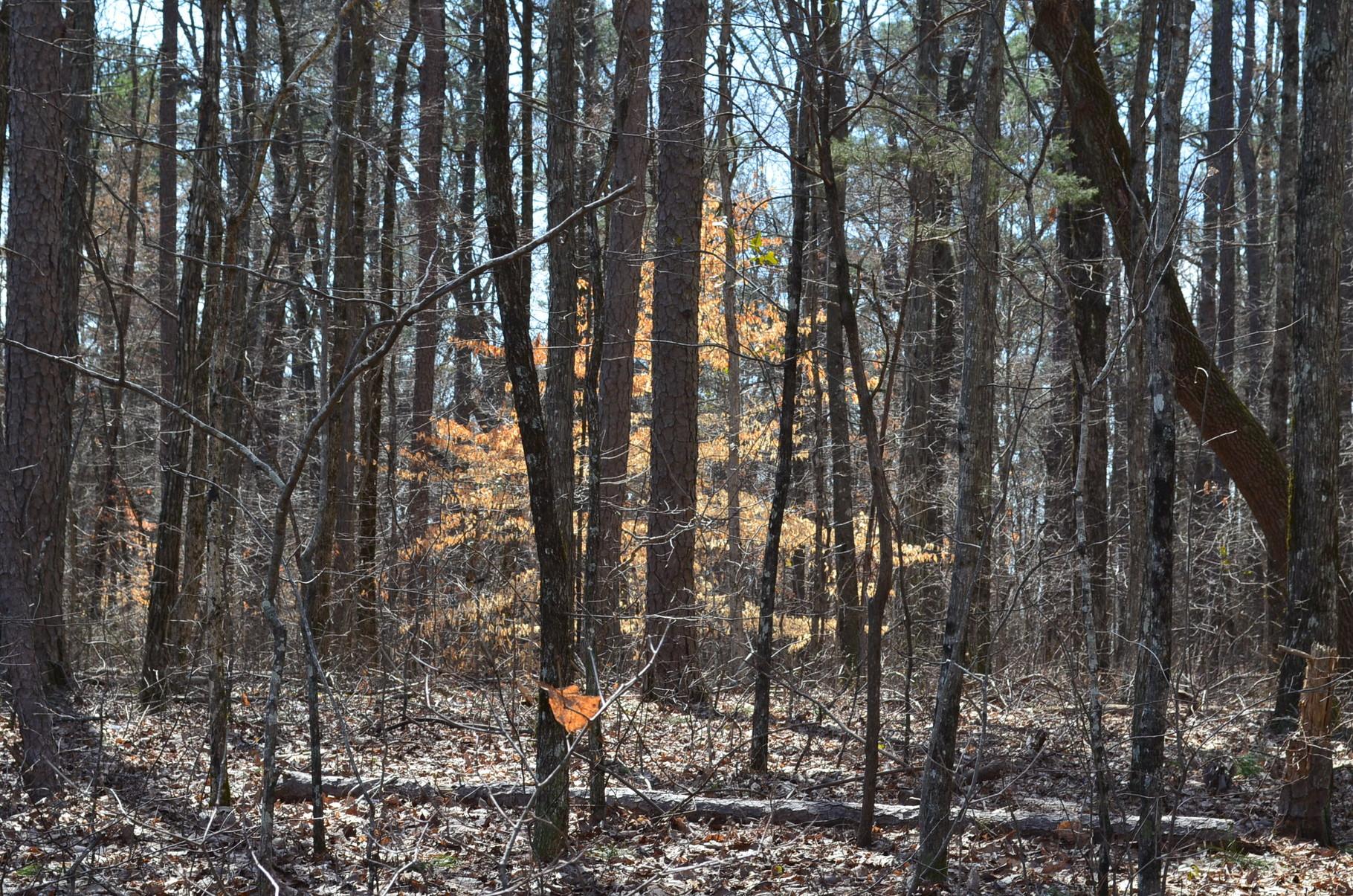 goldener Baum inmitten blätterloser Bäume