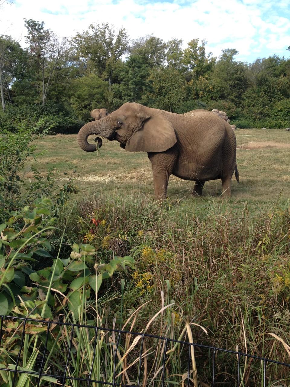 Elefanten sind cool...
