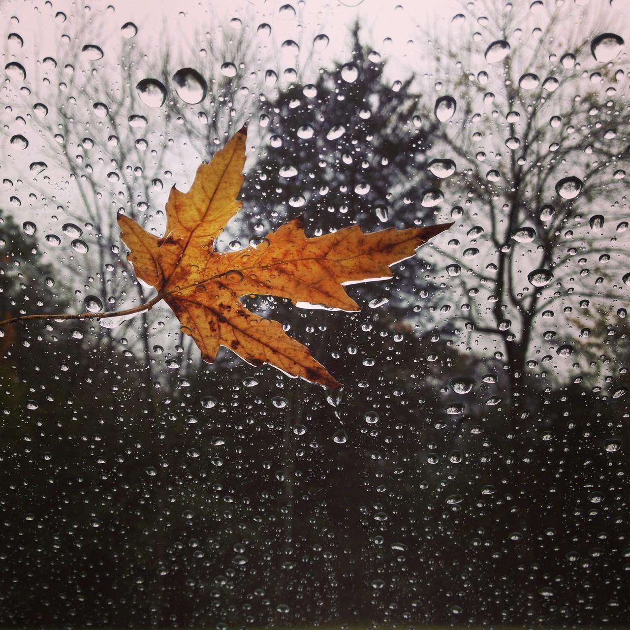 Endlich Herbst auch hier in Tennessee!