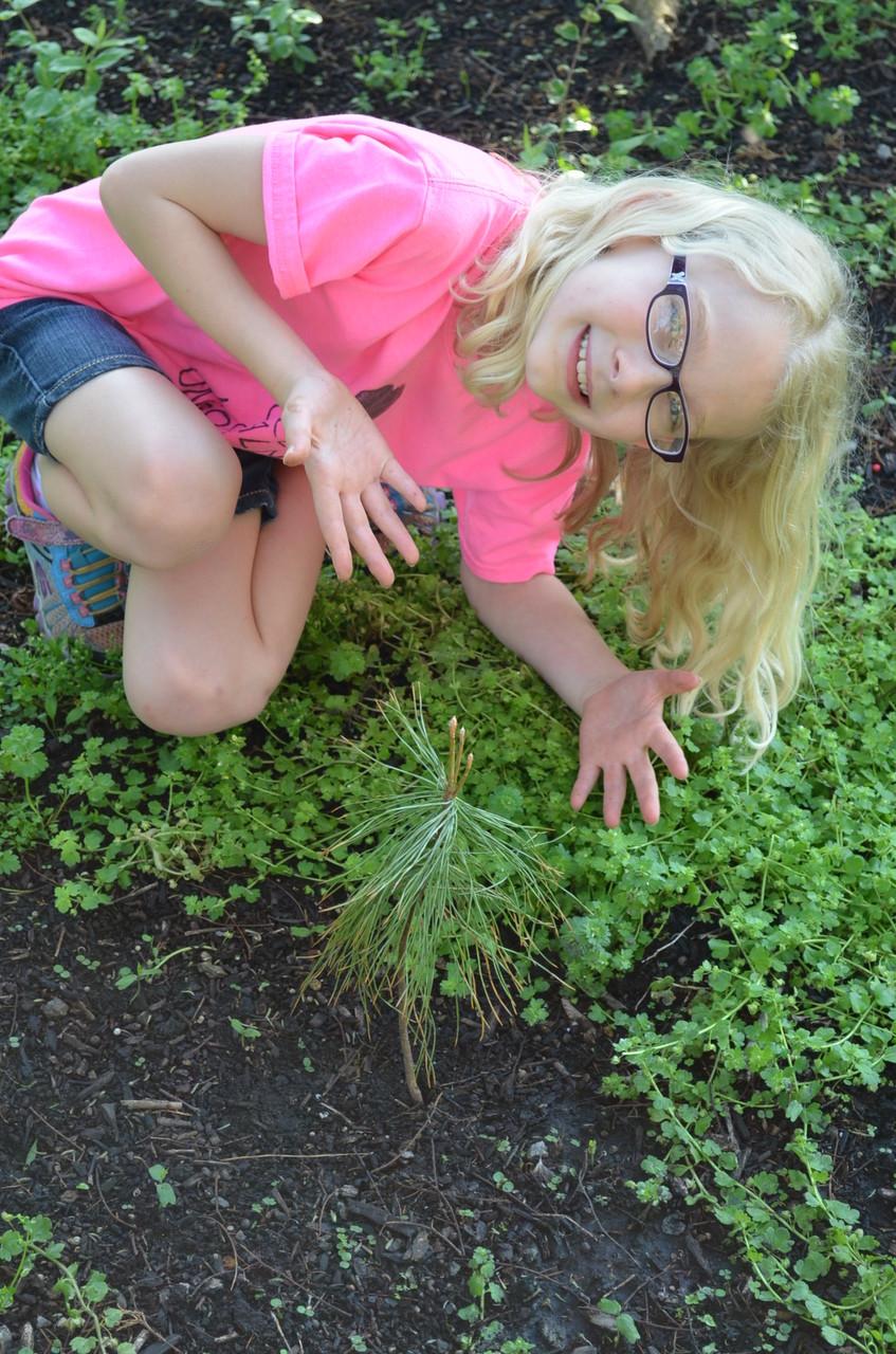 S. hat einen Baum gepflanzt...