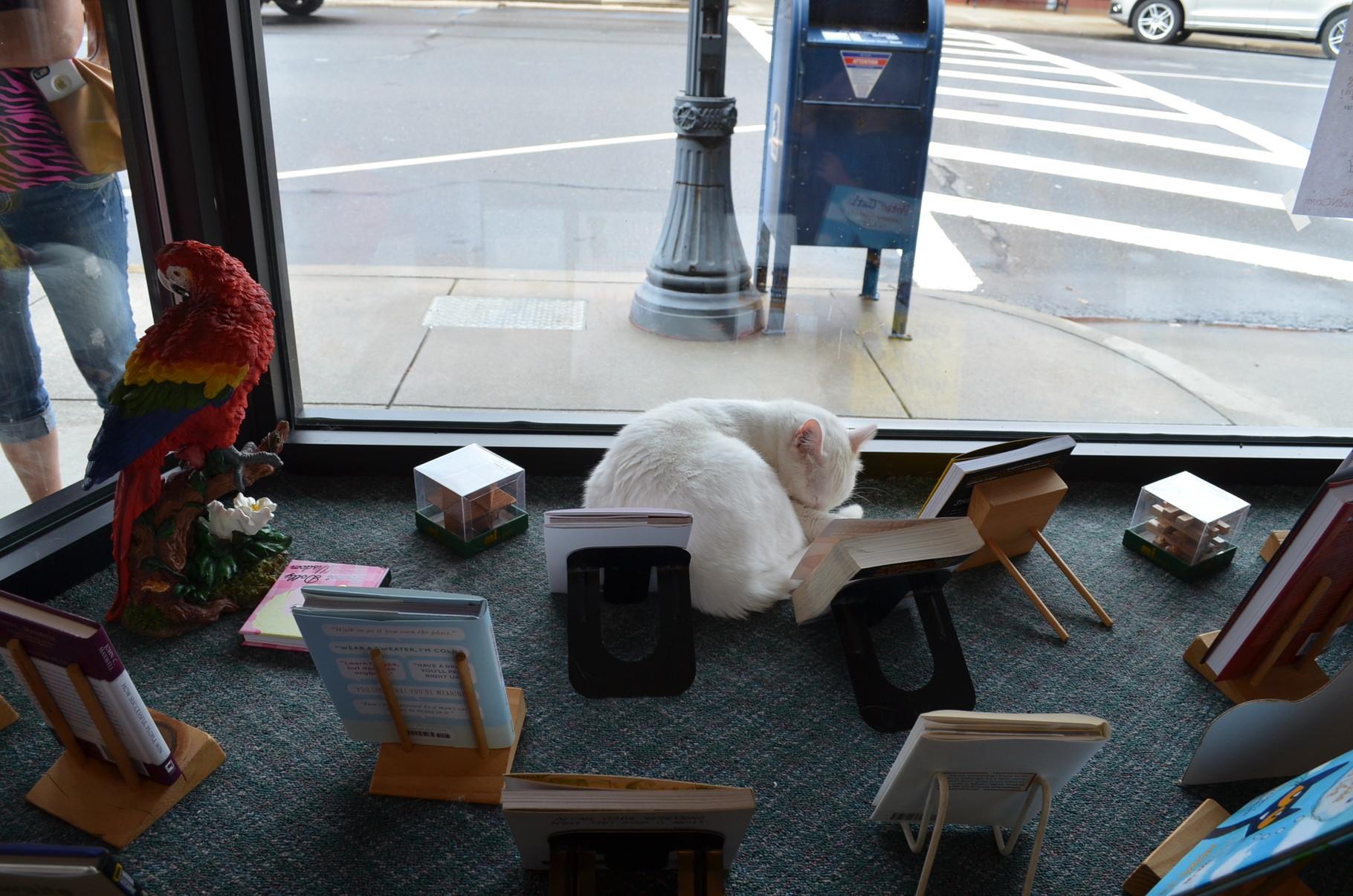 bester Laden: Buchladen mit Katzen!