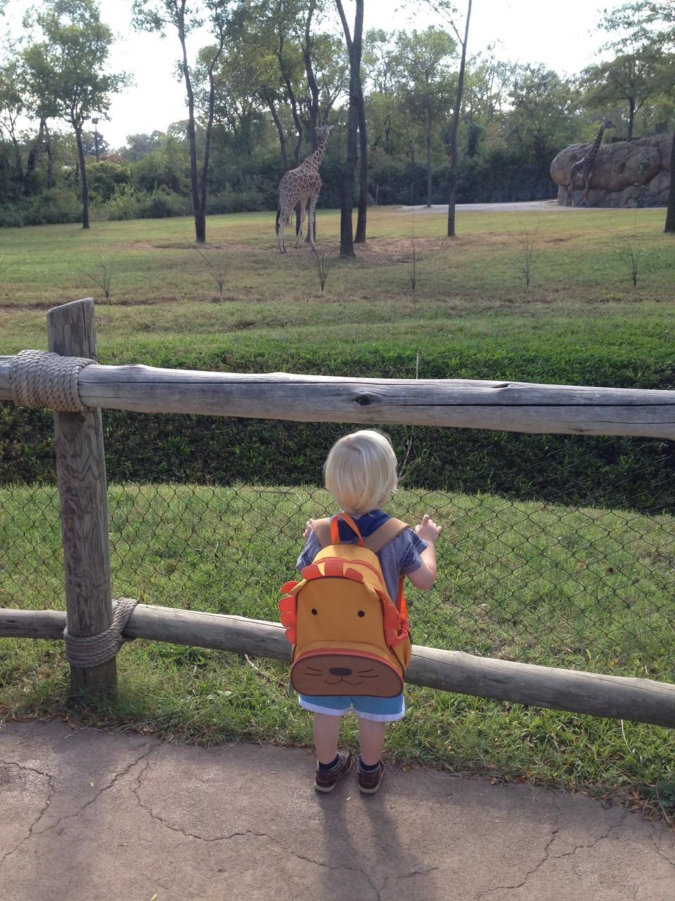 ...Giraffen auch!