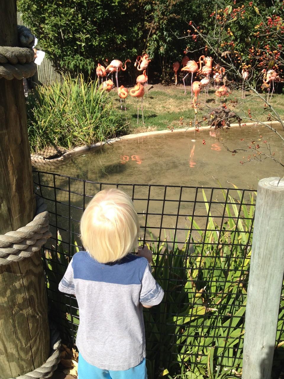 Flamingos sind auch ganz interessant