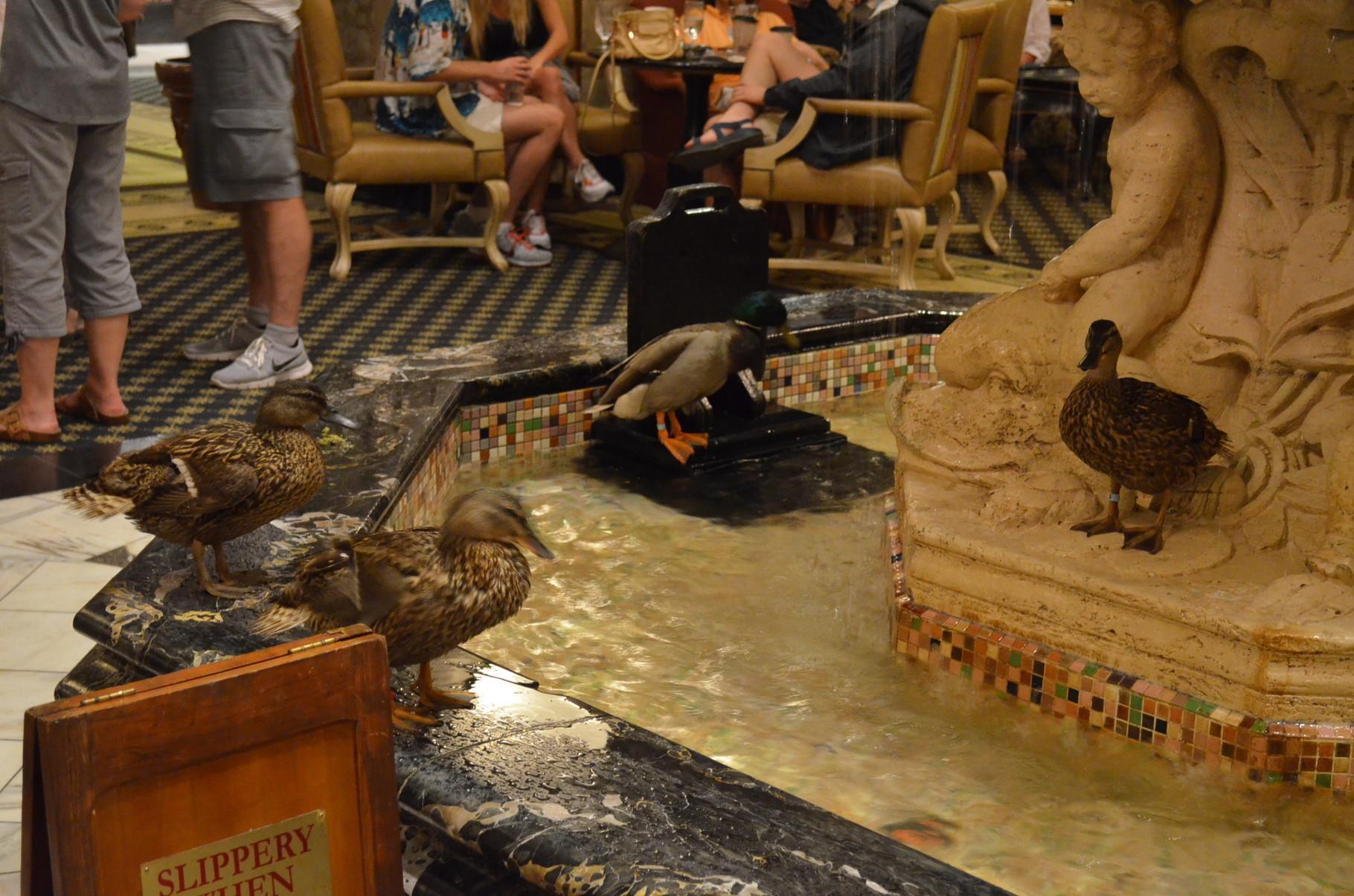 die berühmten Enten