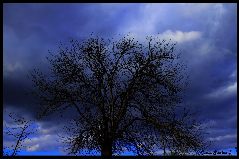 Árbol en invierno al atardecer