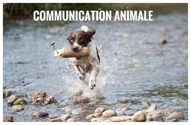chiens,communication animale,sport,eau, dressage