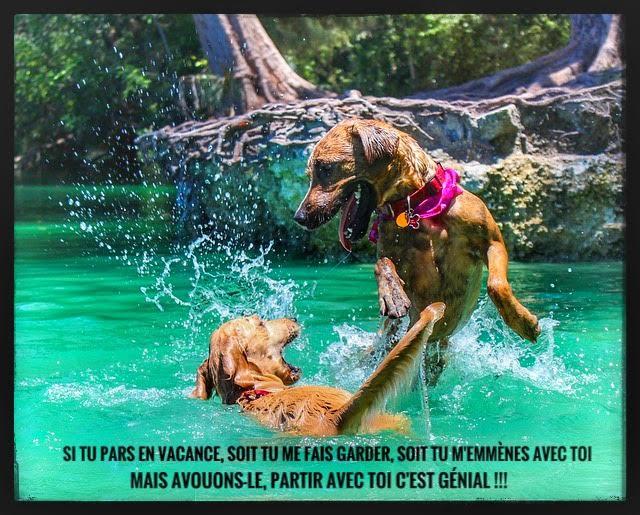 vacance, chiens,garde d'animaux,génial,eau