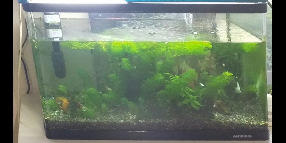 東本郷ケアプラザのミニ水族館