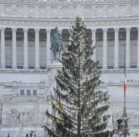 Tannenbaum Lustig.News Aus Rom Ein Gerupfter Tannenbaum Wird Twitter Hit