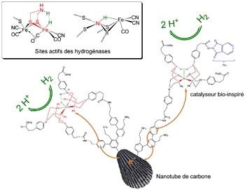 Catalyseur bio-inspiré pour la production d'hydrogène