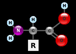 structure d'un acide aminé