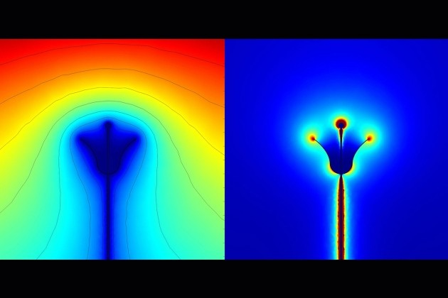 Champ électrique floral perçu par une abeille