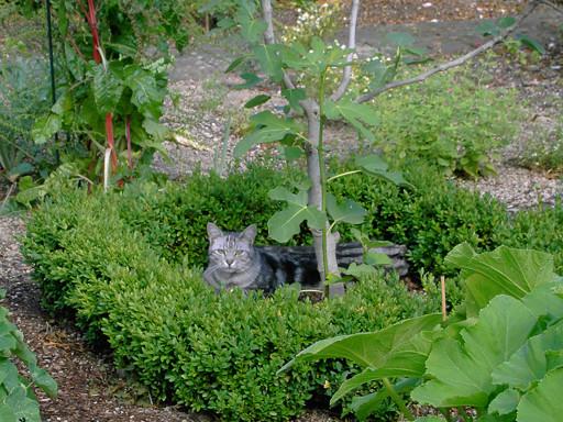 Katze macht Nickerchen im Garten Ebel, Auszeithaus AUSZEIT MITTENDRIN, Ochtendung