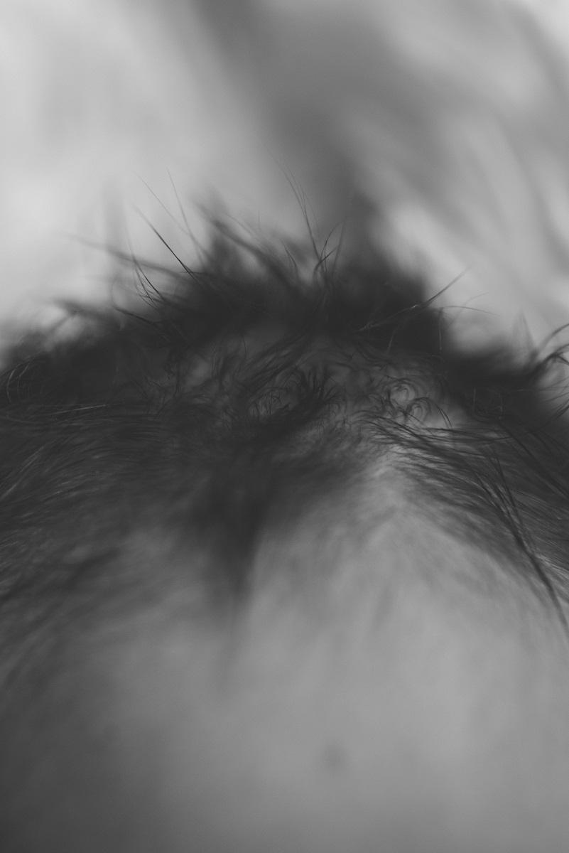 Newborn Detail Haare