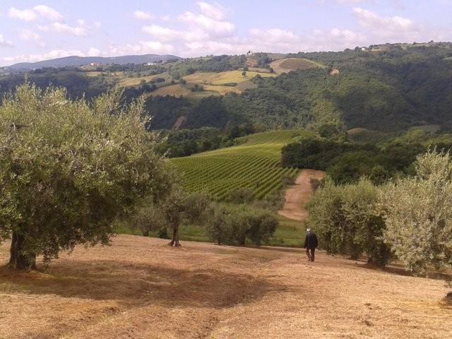 Terre del Boschetto de la Romita località Pomonte Gualdo Cattaneo