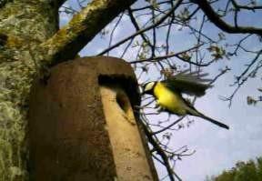 la Rivière aux Oiseaux : un sentier de découverte ornithologique à découvrir chez les Ânes de Vassivière