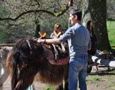 donkey trekking auvergne