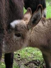 farm with donkeys
