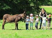donkey farm tour