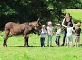 donkey farm tour