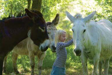 randonnée avec un âne en Limousin