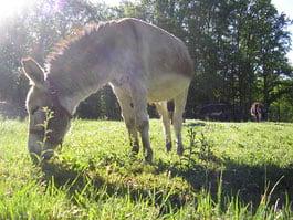 balade avec un âne en famille