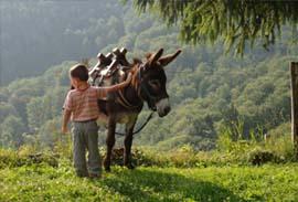 En Limousin, randonnée en famille avec un âne