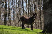 rent a donkey to hike