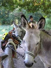 hike with a donkey