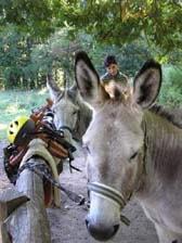 hike with a donkey
