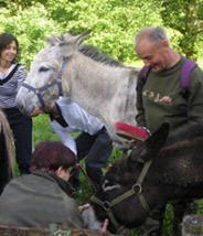 activité et visite pour handicapés en Limousin : les ânes de Vassivière