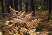 millevaches natural park rental
