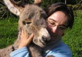 holiday with a donkey