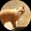 永徳寺の猫