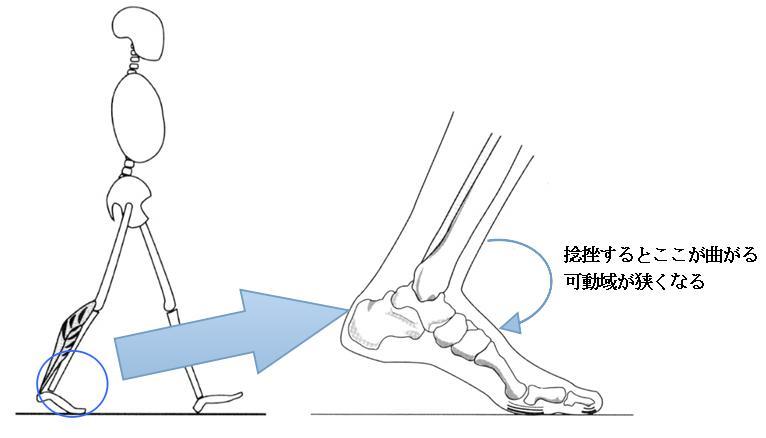 歩行と足の可動域