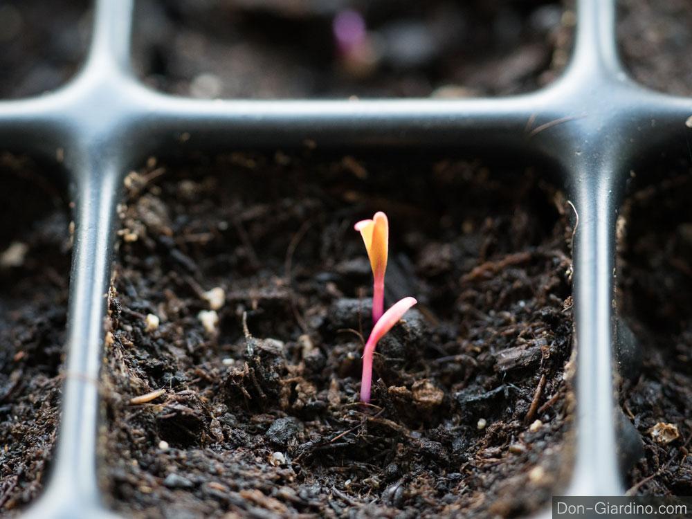 Jungpflanzenanzucht ohne Kunstlicht