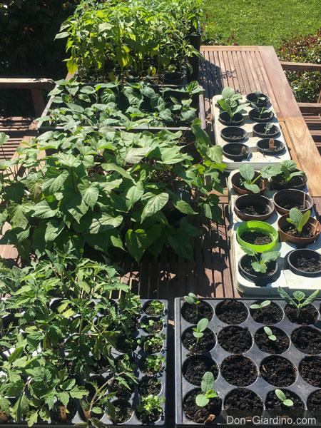 Abhärtungsphase für Jungpflanzen an der frischen Luft